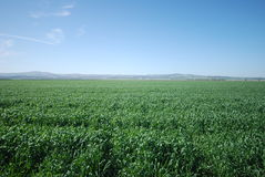 Green fields and blue skies Royalty Free Stock Photography