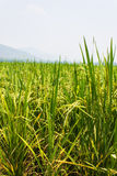 Green fields blue skies Royalty Free Stock Photos