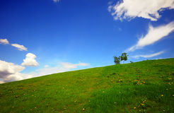 Green fields and blue sky Royalty Free Stock Image