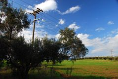 Green fields, blue sky, lonely tree. Spectacular landscape: green fields, blue sky, lonely tree; electricity reference with the power lines Royalty Free Stock Photography