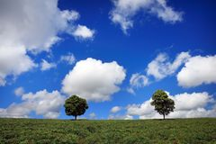 Green fields, the blue sky and trees Royalty Free Stock Photo