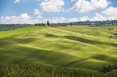 Green fields and blue sky,Tuscany,Italy. Nice view of green field on Tuscan hills,Italy Royalty Free Stock Image