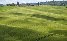 Green fields and blue sky,Tuscany,Italy. Nice view of green field on Tuscan hills,Italy Stock Photo