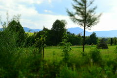 Green fields in Carpathian Mountains Stock Photos