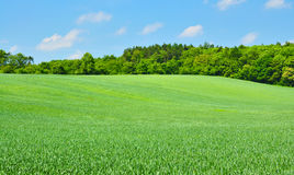 Green fields Stock Photo