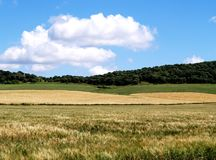 Green fields in countryside stock photos