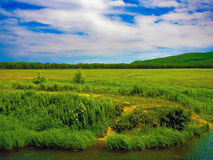 Green fields in countryside Royalty Free Stock Image