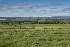 Green fields with cows in the distance. And blue cloudy skies Stock Photos