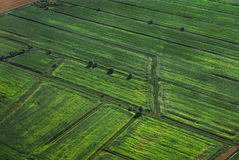 Green fields Royalty Free Stock Photography