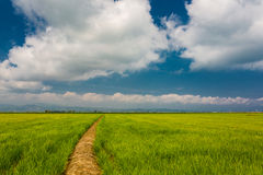 Green fields in Delta del Ebro Stock Images