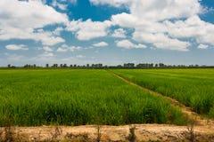 Green fields in Delta del Ebro stock photo