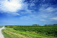Green fields by dirt road Stock Image