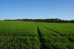 Green Fields. Forever Stock Photo