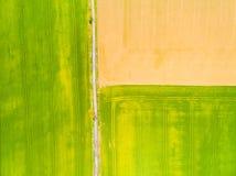 Green fields with geometric pattern. Stock Photos