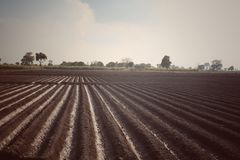 Green fields. Crops villag village sky cloud punjab stock photo