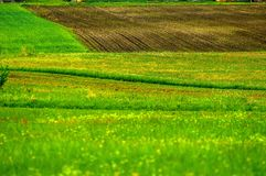 Green fields with green grass Royalty Free Stock Images