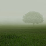 Green fields in heavy mist Royalty Free Stock Photography