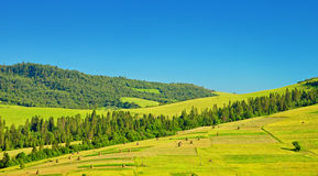 Green fields on hills Stock Photos