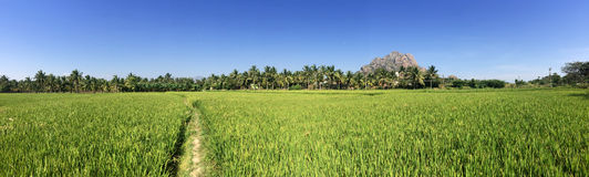 Green fields and hills. India. Royalty Free Stock Photography