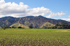 Green fields and hills of Wairau Valley Stock Images