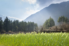 Green fields in Himalaya mountains Stock Image