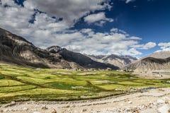Green fields and Himalaya mountains- Ladakh, India Royalty Free Stock Image