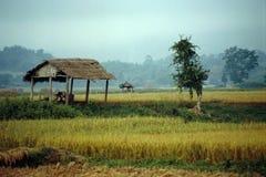 Green Fields of Hsipaw - Myanmar stock photo