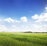 Green Fields Stock Image