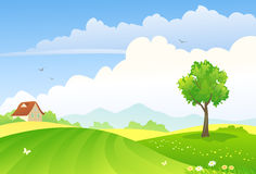 Green fields. Illustration of a green countryside Stock Images