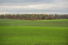 Green fields, interesting landscape,. Hilly passages, rows of autumn trees Stock Photo