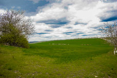 Green fields. A landscape with green grassy fields and blue sky with white clouds Stock Photos