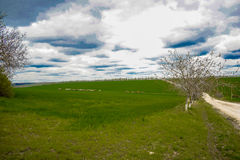 Green fields. A landscape with green fields under blue skies in the spring Royalty Free Stock Photo