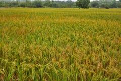 Green Fields, Lushy Stock Photo