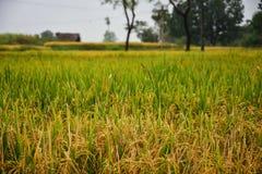 Green Fields, Lushy Stock Image