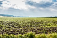 Fields and meadows. Green fields, meadows and forests with bright sky and clouds Royalty Free Stock Photography