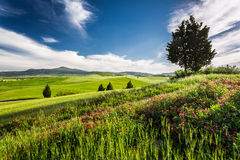 Green fields and meadows in the valley of Tuscany Stock Photos