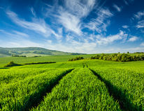 Green fields of Moravia Royalty Free Stock Photo