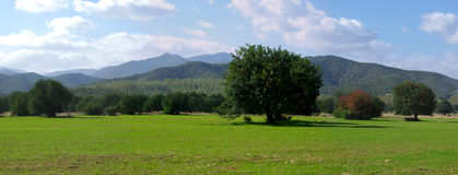 Green Fields and Mountains. Green Fields, trees and Mountains near Capoterra (Sardinia - Italy royalty free stock image