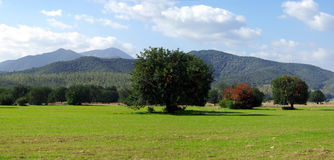 Green Fields and Mountains. Green Fields, trees and Mountains near Capoterra (Sardinia - Italy stock images