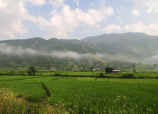 Green fields with mountains background in Yenbai province, Vietnam Stock Photography