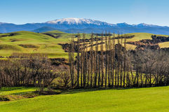 Green fields and mountains in South Island, New Zealand Royalty Free Stock Photo