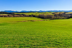 Green fields and mountains in South Island, New Zealand Stock Photos