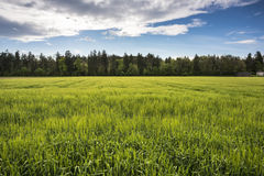 Green fields near forest in Thun Stock Image