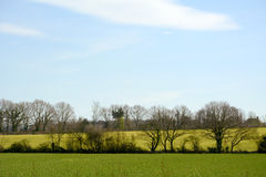 Green fields with new crops in Kent, England Royalty Free Stock Photo