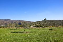 Green fields and olive groves of Andalusia Royalty Free Stock Image