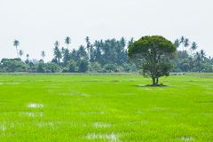 Green Fields in Pulau Pinang. Green Fields in Pulau Pinang at Malaysia stock photos