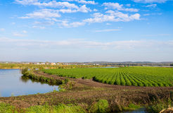 Green fields on the river Royalty Free Stock Photos