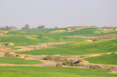 Green fields and rolling hills Royalty Free Stock Photos