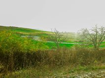 Green fields royalty free stock photos