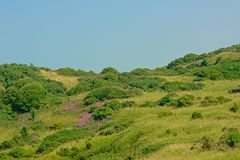 Green fields with shrubs and purple flowers along the French North sea coast,. Green fields with shrubs and purple flowers under a blue sky along the Opal North stock photography